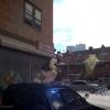 SWAT Sniper on Call