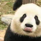 Jason Panda