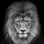 Koning201